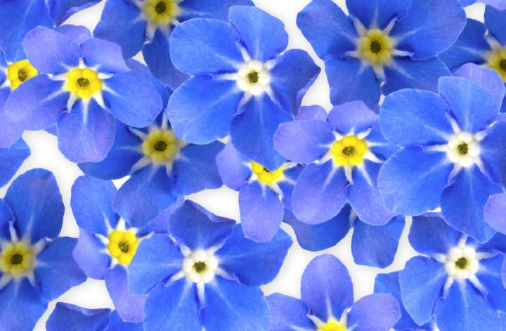 """Laat de """"Vergeet-mij-nietjes"""" bloeien"""